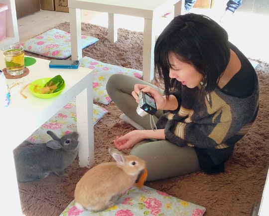 Rabbit Cafes:  Relax, It's Not What You Think