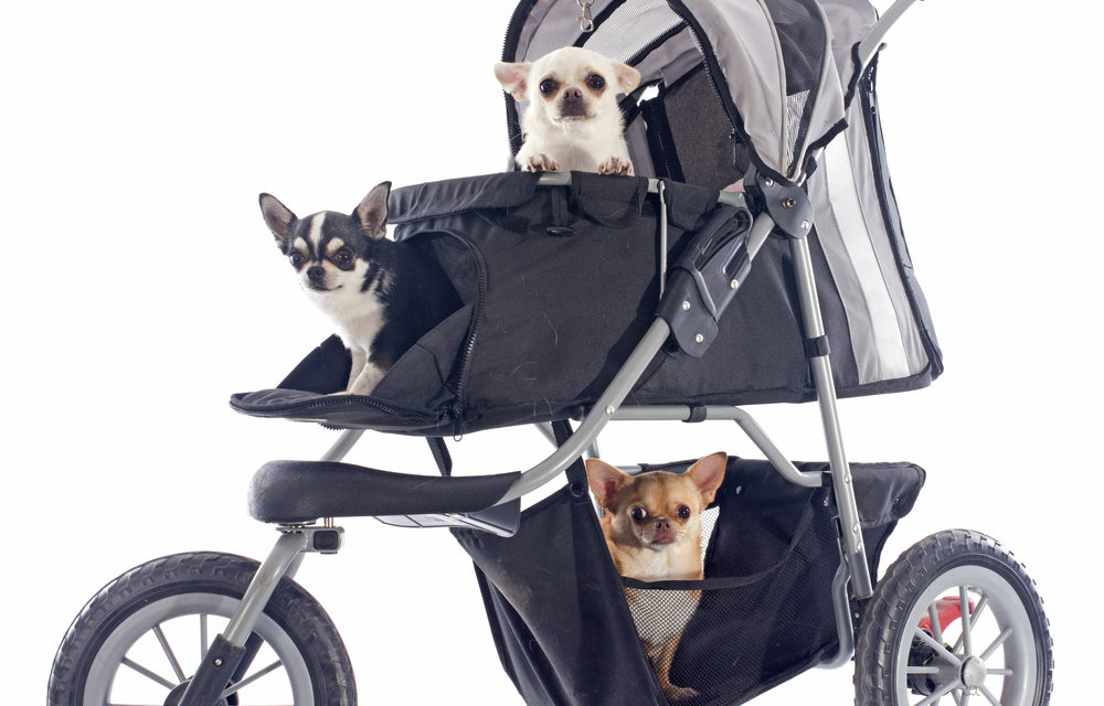 What's Up Dog?…A Stroller?!